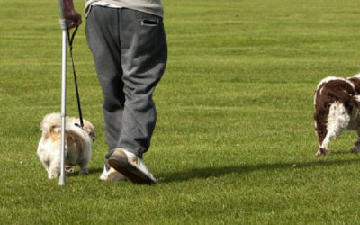 ¿Quién puede beneficiarse de la actividad física en Esclerosis Múltiple?                                        4.67/5(12)